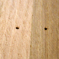 A basic tip is to have nail holes punched for floor sanding